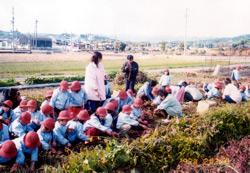 柳井幼稚園 園の行事